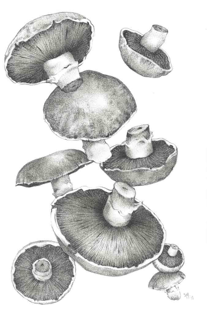 Sharyn Madder Mushrooms
